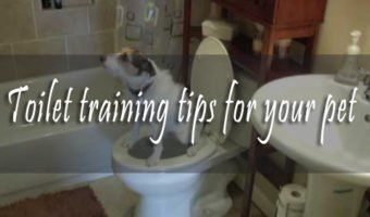 Toilet Training Tips for Your Pet
